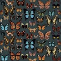 Papillon Wide & Style